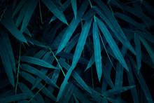 Blue Colored Jungle Leaves Bac...