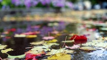 Close Up Of Wet Leaves On Ground In Autumn