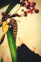 Close-up Of Yellow Caterpillar