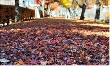 Surface Level Of Autumnal Leaves On Ground