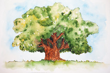 Watercolor Drawing Of The Broa...