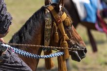 馬具を付けた馬