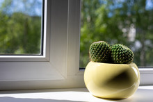 A Cactus In A Yellow Pot Stand...