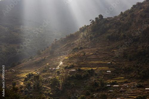 Fototapeta Beautiful fields of rice on trekking in Annapurna Cirquit, Nepal. obraz