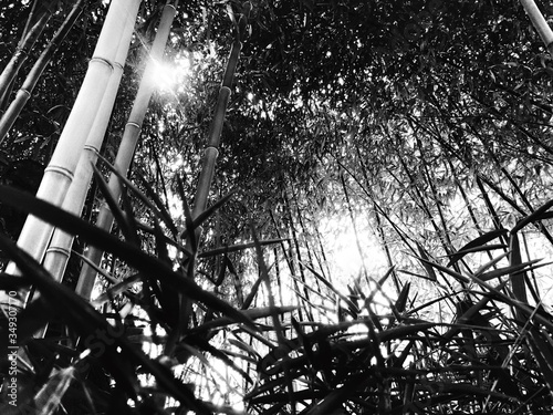 Papel de parede Low Angle View Of Bamboos On Field