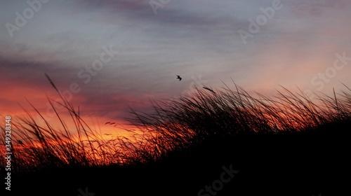 Obraz na plátně Grass At Sunset