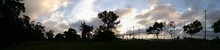 Panoramic Shot Of Silhouette Trees Against Cloudy Sky At Dusk