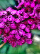 canvas print picture - Close-up Of Pink Flowers Against Blurred Background