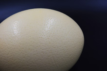 Large Ostrich Egg Located On A...