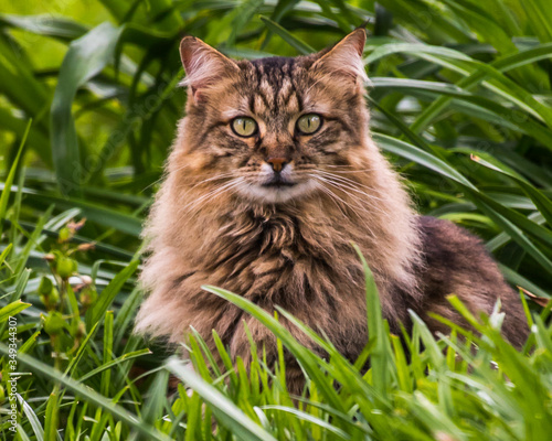 Domestic cat portraits