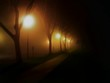 Illuminated Street Lights By Trees In Park At Night During Foggy Weather