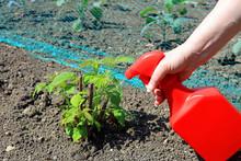 A Garden Spraying A Raspberry Cane To Maintain A Healthy Plant.