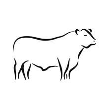 Beef Angus Cattle Logo Vector Design