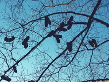 Low Angle View Of Shoes Hanging On Bare Tree Against Blue Sky