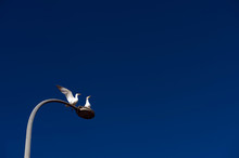 Two Seagulls Standing On The S...