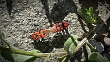High Angle View Of Bugs Mating Outdoors