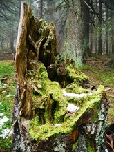 Moss Growing On Broken Tree Trunk At Forest