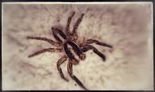 Close-up View Of Venomous Spider