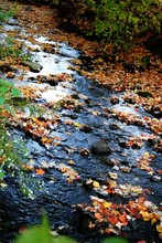 Scenic View Of Stream In Forest