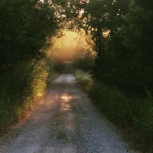 Dirt Road In Forest At Morning