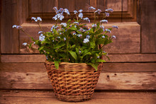 Wicker Basket With A Bouquet Of Forget-me-nots On A Wooden Background.