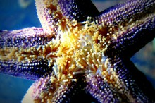Close-up Of Starfish In Sea