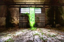 Ivy Growing In Abandoned Building