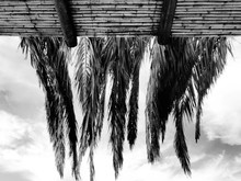Low Angle View Of Palm Leaves ...