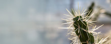 Background Of A Cactus With Lo...