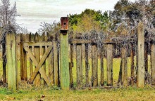 Wooden Fence With Birdhouse And Overgrown Vine