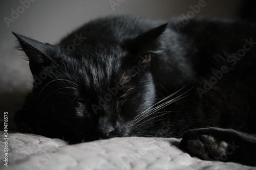 Obraz na plátně Close-up Of Cat Sleeping On Bed