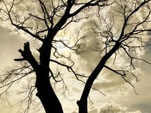 Burnt Black Tree Trunk Against...