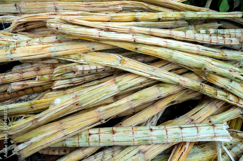 Sugarcane bagasse, nature fiber recycle for biofuel pulp and building materials Canvas Print
