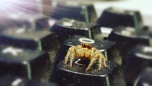 Close-up Of Jumping Spider On Keyboard