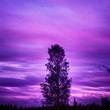 Leinwanddruck Bild - Silhouette Trees Against Purple Cloudy Sky