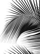 Beautiful Palm Leaf Silhouette...