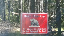 Warning Sign With Grizzly Bear Image In Forest
