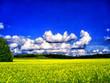Leinwandbild Motiv Scenic View Of Oilseed Rape Field Against Blue Sky