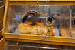 canvas print picture - Unsanitary dirty glass lid full of smudges from people touching it as part of self service shelf with pastry at bakery department in supermarket
