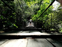 Low Angle View Of Man Walking On Footbridge In Forest