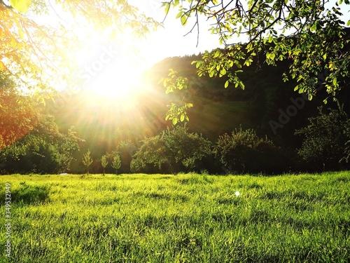 Fototapeta Trees On Grassy Field obraz na płótnie