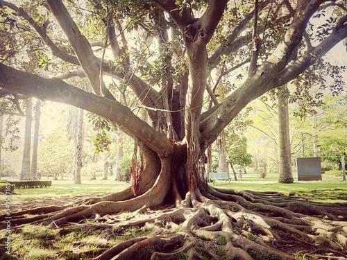 Old Tree In Park Fotobehang