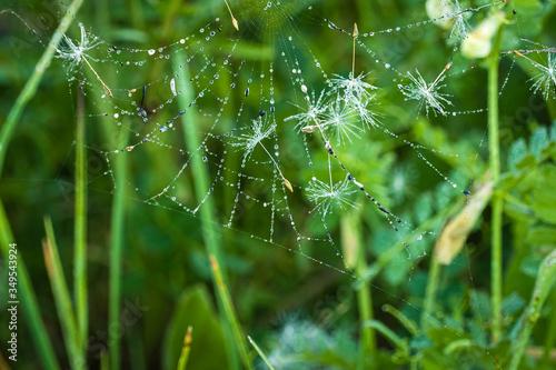 Toile d'araignée Canvas Print