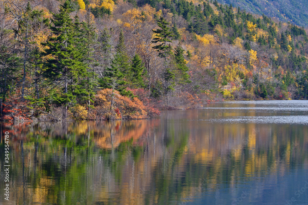 Fototapeta Autumn Reflections along the White Mountains and the shoreline of echo lake in New Hampshire