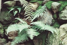 Close-up Of Fern Growing Amidst Rocks
