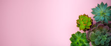 Succulent Plant Banner Backgro...