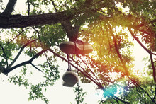 Low Angle View Of Shoes Hanging On Tree During Sunset