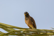 Mynah Looks From Above