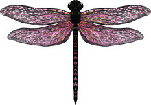 Pink Yellow Dragonfly With Del...