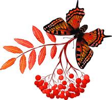 Monarch Butterfly Admiral Oran...